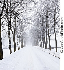 the winter road - the snow-covered road in park in a winter...