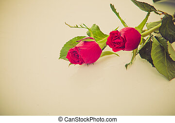 roses concept for love or valentine