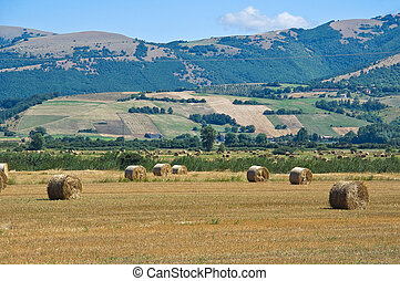 Hay bale field.