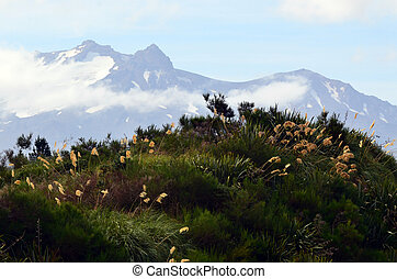Mt Ruapehu in Tongariro National Park, New Zealand.