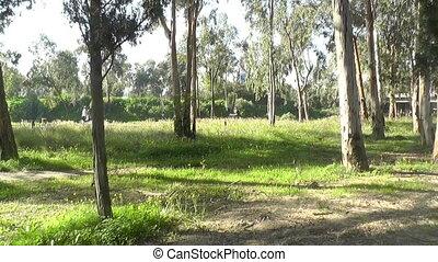 green park in the mornin