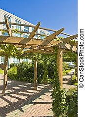 Roof top  - garden pergola