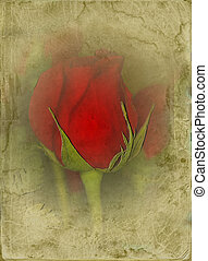 cartouche - grungy red rose