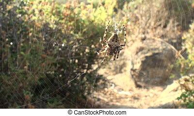 spider detail