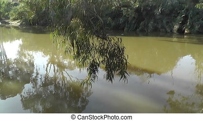 swimming ducks on a river