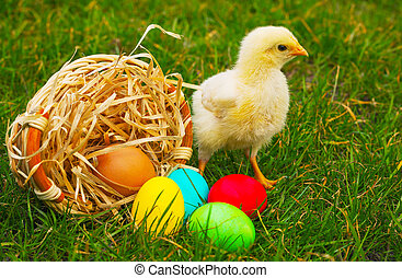 Small baby chickens with colorful Easter eggs