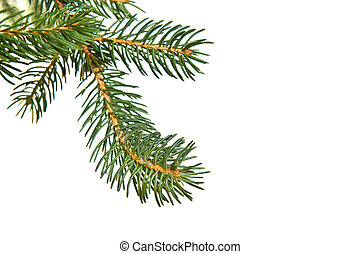 Pine fur tree branch isolated on white for Christmas...