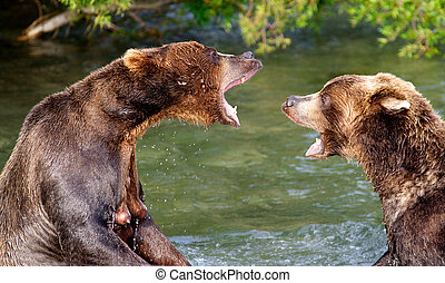 The bear conversation