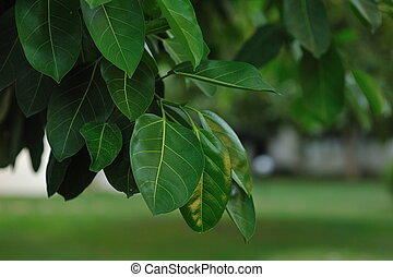 lush foliage - in a park close-up of bright green leaves of...