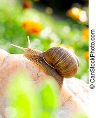 Snail on the rock with backlight.