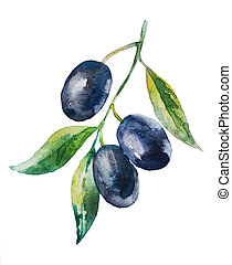 Olive branch - Aquarelle picture of black olive branch with...