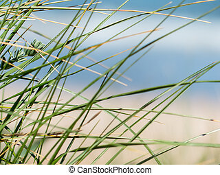 Grass on blurred beach - Some grass with sky, sea and sand...