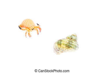 hermit crab and shell - This is a picture of a hermit crab...