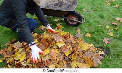 woman load barrow leaves - blond woman worker hands load...