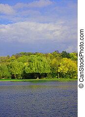 藍色,  der, 天空, 秋天, 聯合國, 森林