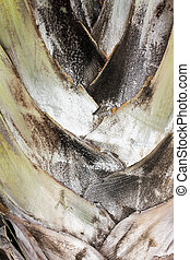 Palm bark - Close up of the bark of a palm tree
