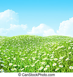Summer shiny colorful meadow Background.