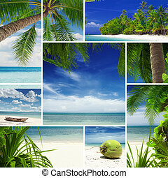 tropic mix - Tropic theme collage composed of different...