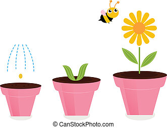 Flower in pots growth stages isolated on white