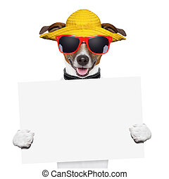 summer dog banner - funny summer dog holding a blank banner