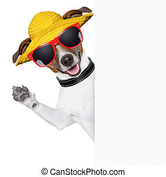 summer dog banner - funny summer dog behind a blank banner