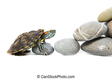 Turtle climbing up the steps. Concept isolated on white...