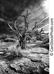 Old Dead Tree in the Desert - Dead tree against a dramatic...