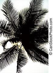 Palm Tree Silhouette - Palm tree silhouette and a little...