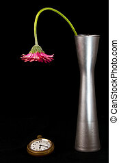 Pink flower looking at watch in silver vase hang down