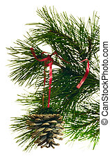 branch fir and cone