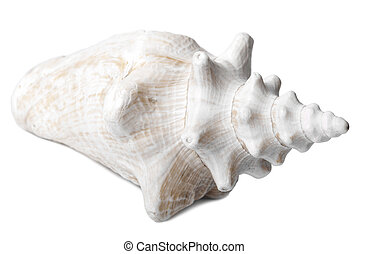Conch Shell - Side View - A lovely conch shell, isolated on...