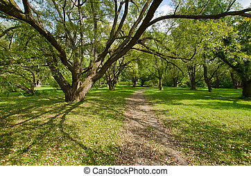 Trees in the Montreal Botanic Garden - Willows in the...