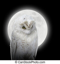 Isolated White Owl in Night with Moon - A white owl bird is...