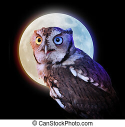 Mysterious Owl Animal at Night with Full Moon - An owl at...