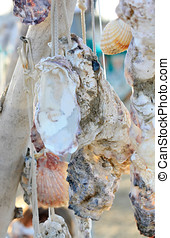 shells hanging charms with messages