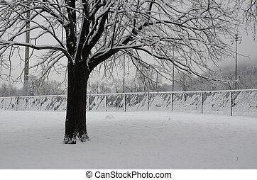 Big Black Tree in a park covered with snow - Snowy Big black...