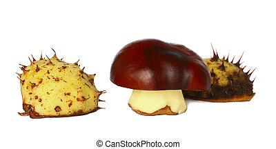 chestnut - Bronze chestnut on white background in...