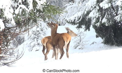 deer running in the mountains