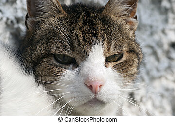 sullen cat - Shot of the domestic cat - sullen cat