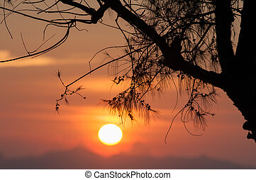 sunset - Pine tree branch and sunset - nature vacations...