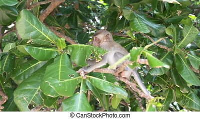 One little white monkey on tree