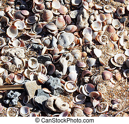 Shells on the beach sand - Sea shells on sand at the beach