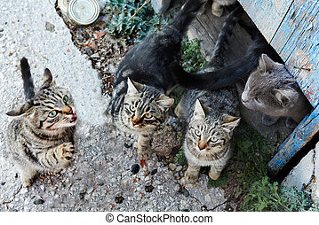 Group of cats - Group of wild black, gray stripped cats