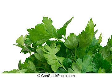parsley - fresh herbs parsley isolated on white