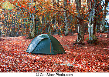 Green tent in the forest - Green tent in the yellow autumn...