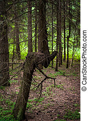 Bending Tree in the Forest