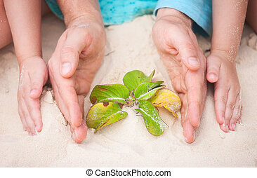 Hands protecting small plant