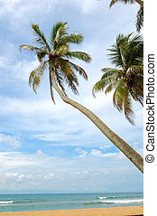 Palm trees on the beach and turquoise water of Indian Ocean,...