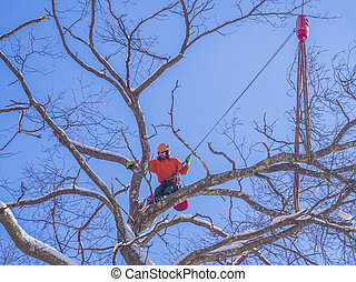 Tree cutting - Tree pruning by a lumberjack