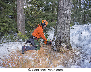 Tree cutting by a lumberjack